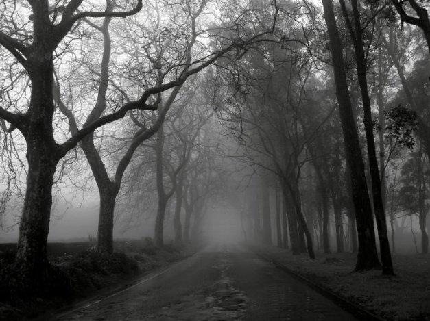 [neblina.jpg]